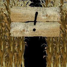 Cover for Corn Maze.